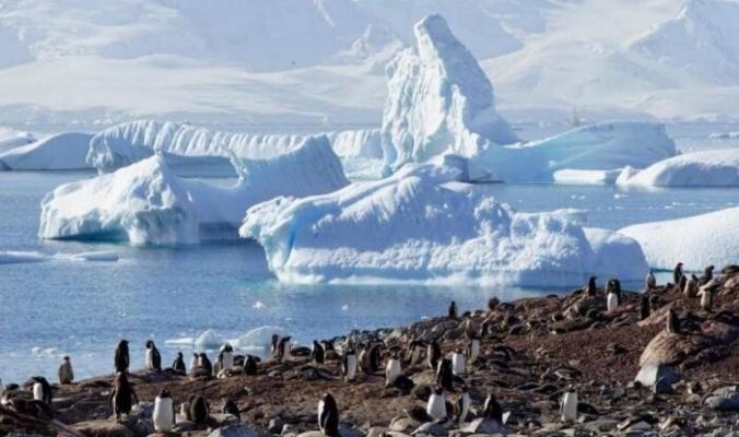 أنتاركتيكا قد تكتسي باللون الأخضر!