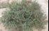 نبتة ذكرها العالم أبو العباس الرومية قبل 8 قرون ستهزم السكري
