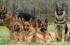 بالفيديو: مجموعة كلاب تفترس امرأة