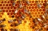 هل تعلم لماذا شكل خلايا النحل سداسية