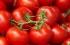 بالصور: كيف تميز بين الطماطم العضوية والمعدلة وراثياً؟