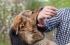 «لن تحصل على 21 حقنة».. ماذا تفعل إذا عضك كلب؟