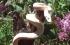 لماذا لا تنزلق الثعابين عند تسلق الأشجار ؟