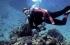 فيديو.. حيوانات بحرية مفترسة تفجر طبلة أذن غواصا وتخلع كتفه وتكسر يده!