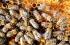 هل تنجح وسائل التكنولوجيا في زيادة أعداد النحل في العالم؟