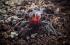 بالصور| ما هي العناكب الأكثر خطورة في العالم؟