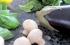 لماذا يجب أن تأكل الفطر والباذنجان يومياً؟