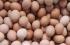 أكل 41 بيضة.. هندي يفقد حياته في رهان مع غريمه