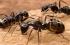 """""""الذكور ليس لهم أب"""".. معلومات علمية تعرفها لأول مرة عن """"النمل"""""""