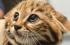 10 حقائق قد تجهلها عن القطط المنزلية