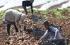 """المزارعون متخوفون لغياب خطة طوارئ في ظل تسارع تفشي """"كورونا"""""""