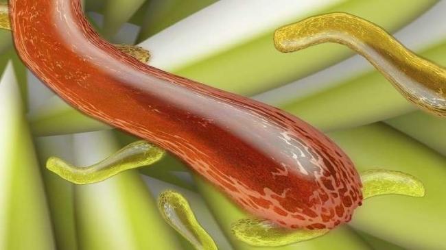 """تحذيرات من """"سوبر بكتيريا"""" تسبب العقم"""