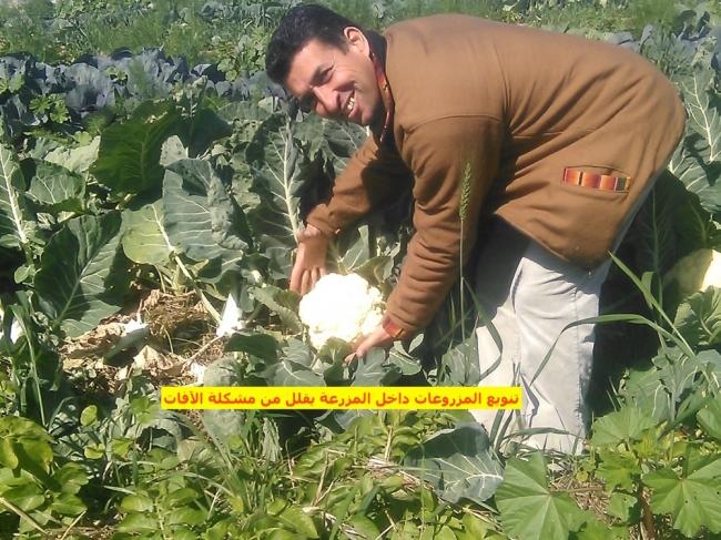 الزراعة وشيء من برمجة العقول :الآفات الزراعية
