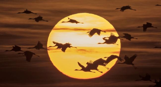 كيف تعرف الطيور المهاجرة طريقها في الليل
