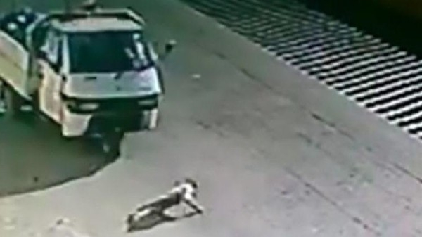 تخيل بماذا عوقب سائق شاحنة دهس كلبا عمدا في إيطاليا؟