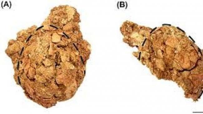 العثور على بيضة ديناصور نادرة في سيبيريا