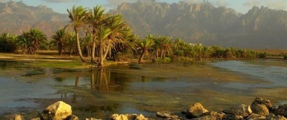 السعودية تستورد الجِمال والرمال.. و9 حقائق مدهشة أخرى عن الشرق الأوسط قد لا تعرفها