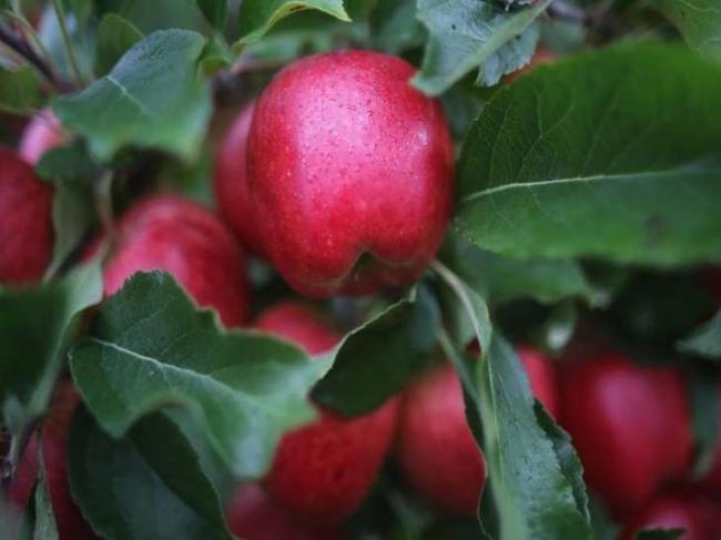 9 فوائد لقشر التفاح.. تعرف عليها