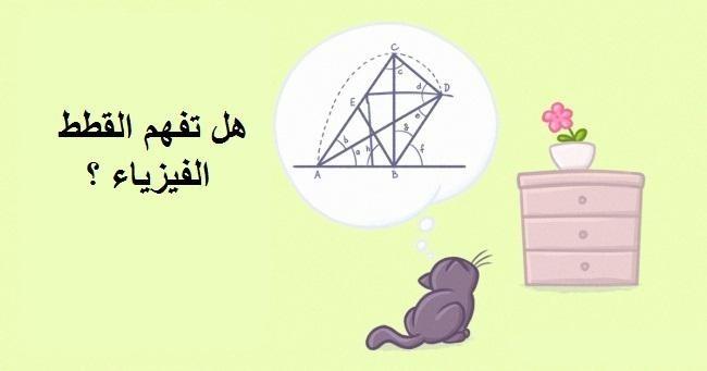 هل القطط تفهم الفيزياء ؟