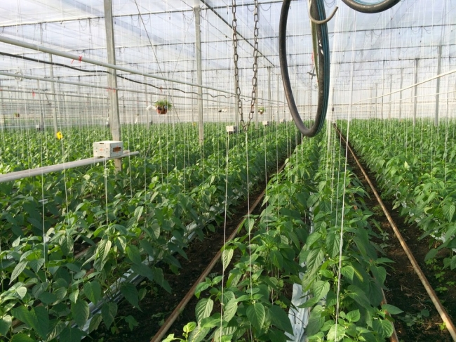 """التكنولوجيا """"المتقدمة"""" والزراعات الكيميائية والمحاصيل المعدلة وراثيا هل تشكل ضمانة استراتيجية لتلبية الاحتياجات الغذائية العالمية؟!"""