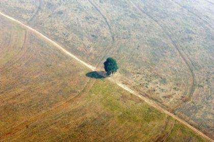 رئة العالم في خطر...ارتفاع حاد في وتيرة إزالة غابات الأمازون