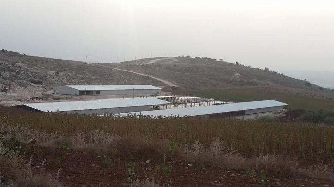 كارثة تحل على قطاع الدواجن مع نفوق عشرات الآلاف من أمهات الدجاج في أكبر مزارع الضفة