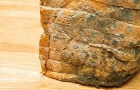 """لماذا يجب ألا تأكل الجزء """"النظيف"""" من الخبز المتعفن؟"""