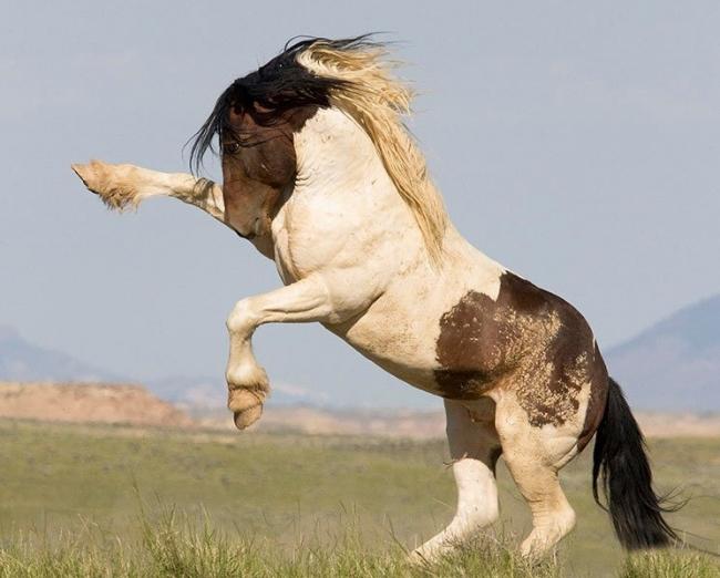 لماذا تُجن الخيول والكلاب في الأيام العاصفة؟