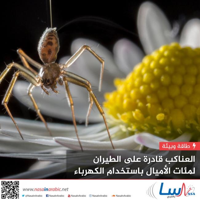 العناكب قادرة على الطيران لمئات الأميال باستخدام الكهرباء