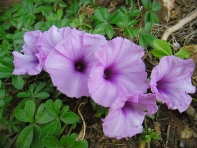 من بينها زهرة ست الحسن: أخطر أنواع الزهور في العالم.. بالصور