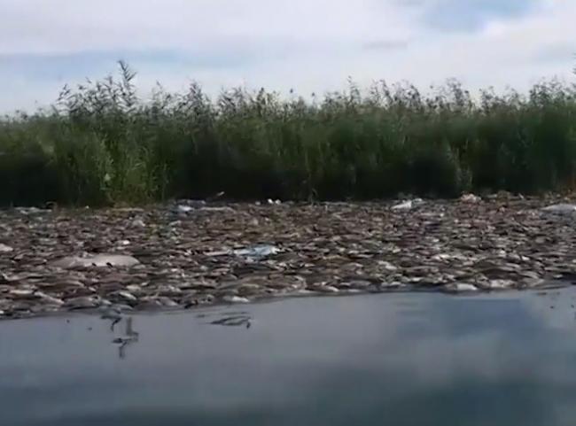 شاهد.. نفوق غامض لآلاف الأطنان من أسماك العراق