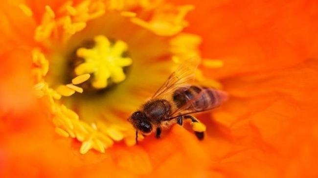 لماذا تتمتع ملكات النحل بذاكرة قوية؟