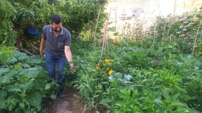 القطاع الزراعي الفلسطيني بين الأهلي والحكومي