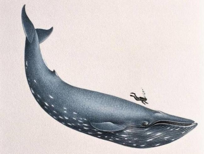 ماذا سوف يحصل لك اذا قام حوت بابتلاعك .. وهل الحوت حقًا قادر على ذلك؟