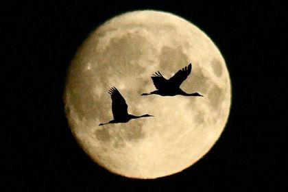 صورة رائعة جدا للقمر