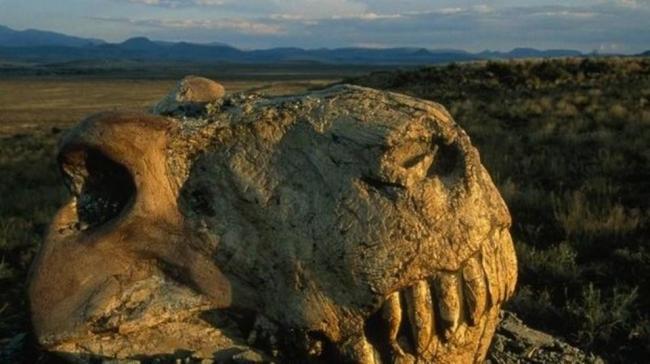 """هكذا حدث """"الموت العظيم"""" قبل 252 مليون سنة"""