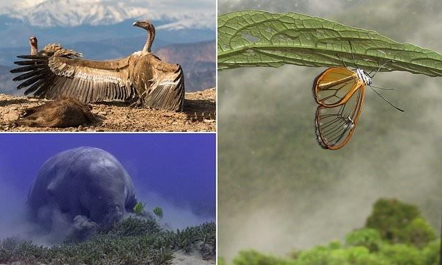 """صورة فراشة بأجنحة شفافة في الغابة المطيرة الإكوادورية تفوز بمسابقة """"BMC Ecology Image Competition"""""""
