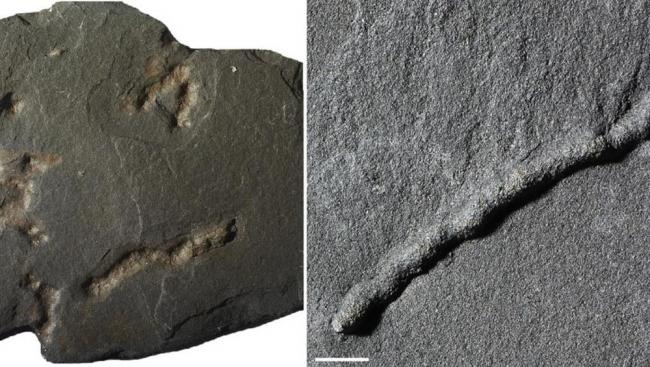 عالم عربي يكتشف أقدم كائن تحرك على كوكب الأرض