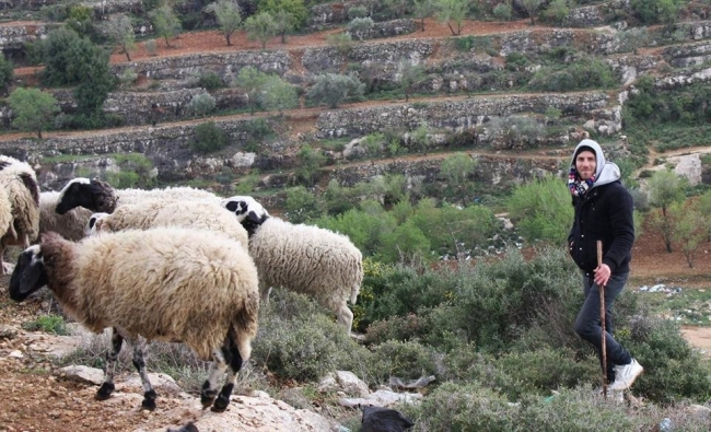 اجد النوباني...ما عرفناه عن طبيعة فلسطين لا يُذكر أمام ما لم يُكتشف