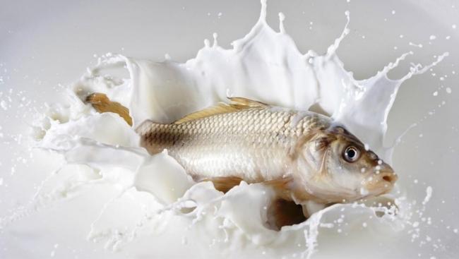 هل فعلاً يشكل تناول السمك واللبن معاً خطراً حقيقياً على صحة الإنسان؟