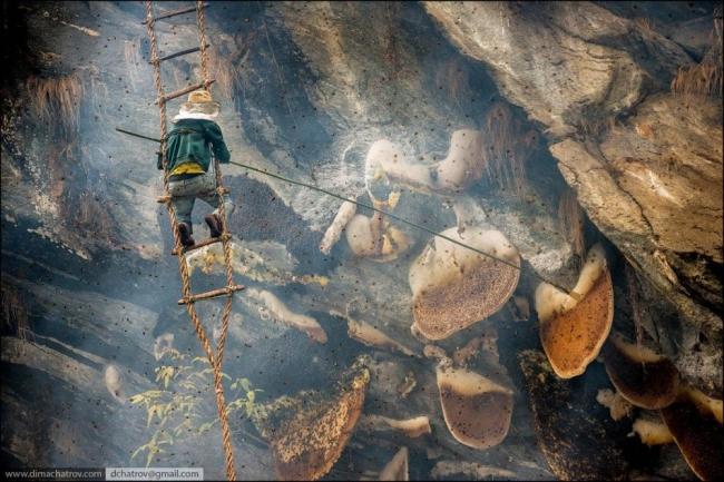 تعرف على العسل المُهلوس الأخطر والأغلى في العالم!