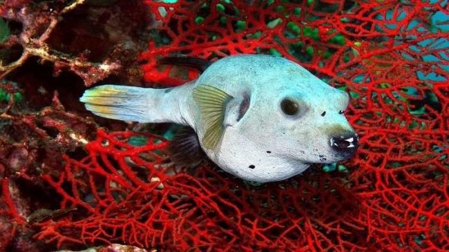بالفيديو... اكتشاف أكثر من 100 مخلوق مجهول في مياه أستراليا!