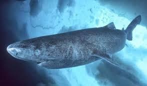 بعضها وُلد في القرون الوسطى ولا يزال حيًّا.. أكبر الكائنات المعمرة على ظهر الأرض