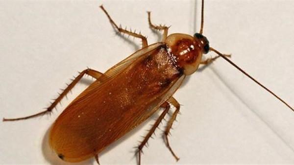 """""""النمل لا ينام"""" والفراشة لديها 12000 عين.. حقائق شيقة عن الحشرات"""