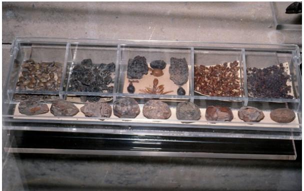 إنسان الكهف كان يأكل الفشار! إليك أغرب الأطعمة التي اكتشفت في المناطق الأثرية