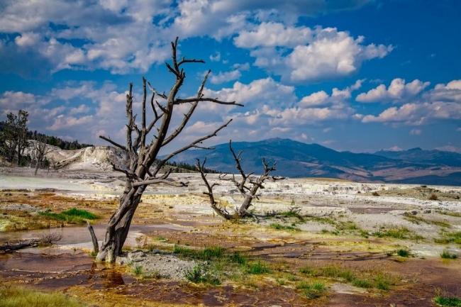 علماء يدقون ناقوس الخطر: الانقراض يهدد مليون نوع