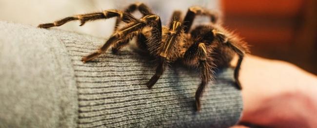 الخوف من الأفاعي والعناكب، فطري أم مكتسب؟