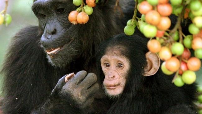 معلومات خاطئة عن الحيوانات عليك التوقف عن تصديقها حالاً!