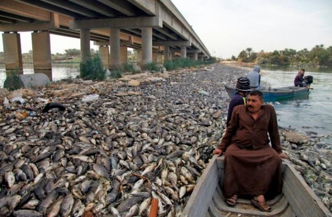 العراق يكشف أسباب نفوق ملايين الأسماك بشكل مفاجئ