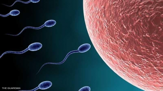 """الحيوانات المنوية """"مسؤولة"""" عن الإجهاض المتكرر"""